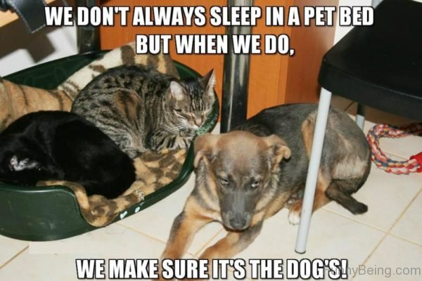We Dont Always Sleep In A Pet