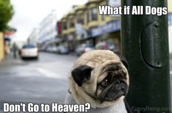 What If All Dogs