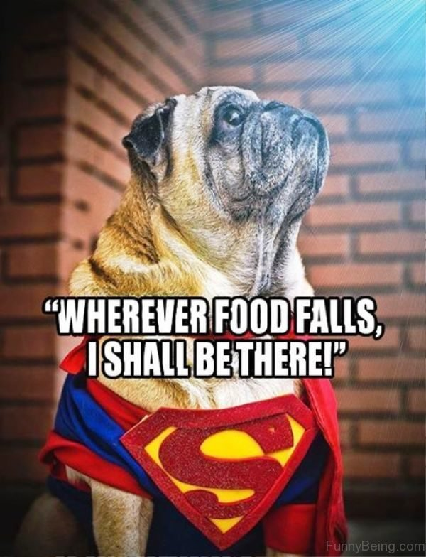 Wherever Food Falls I Shall Be There