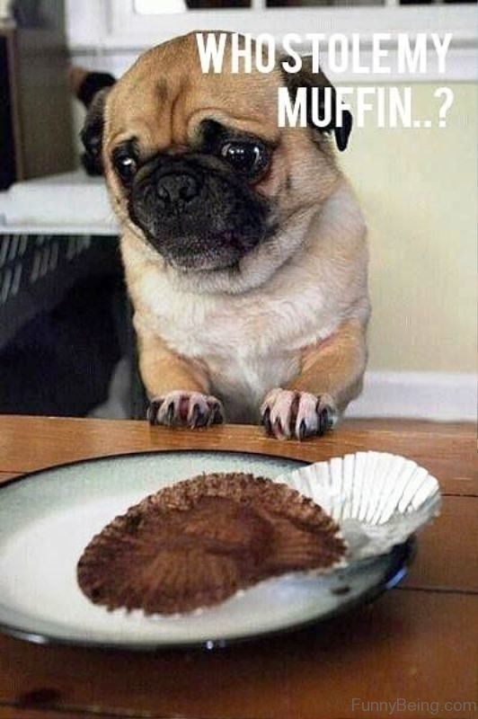 Who Stolen Muffin