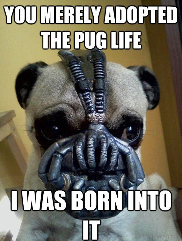 You Merely Adopted The Pug Life