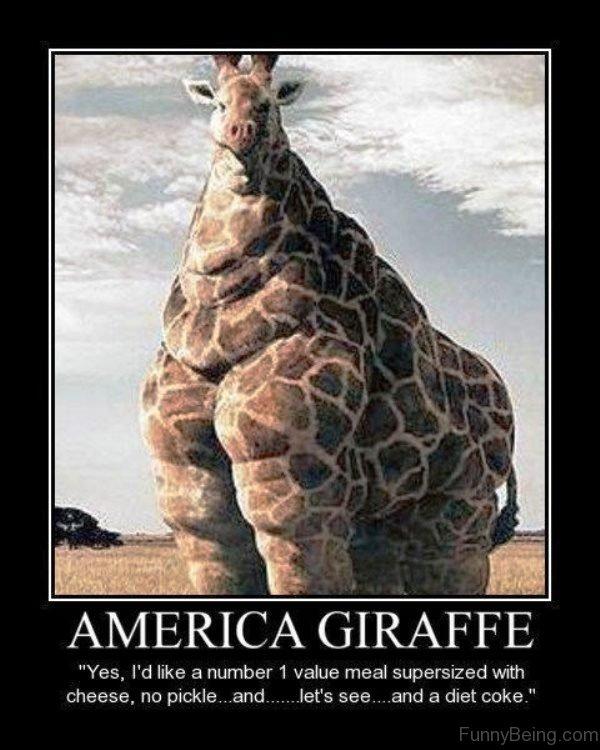America Giraffe