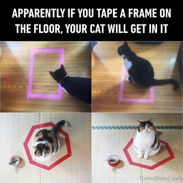 Apparently If You Tape A Frame