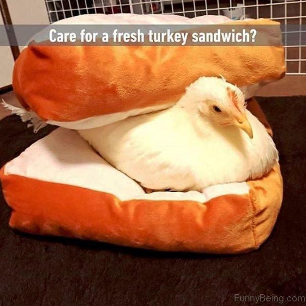 Care For A Fresh Turkey Sandwich