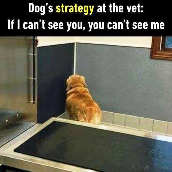 Dogs Strategy At The Vet