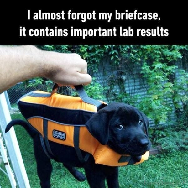 I Almost Forgot My Briefcase