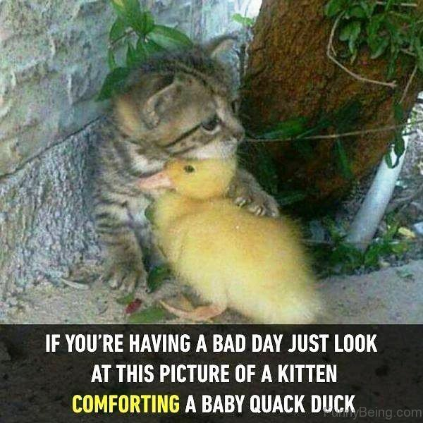 If You re Having A Bad Day
