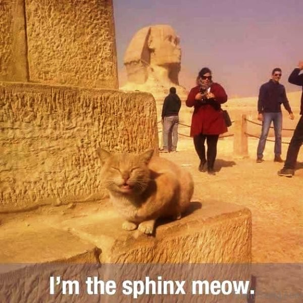 Im The Sphinx Meow