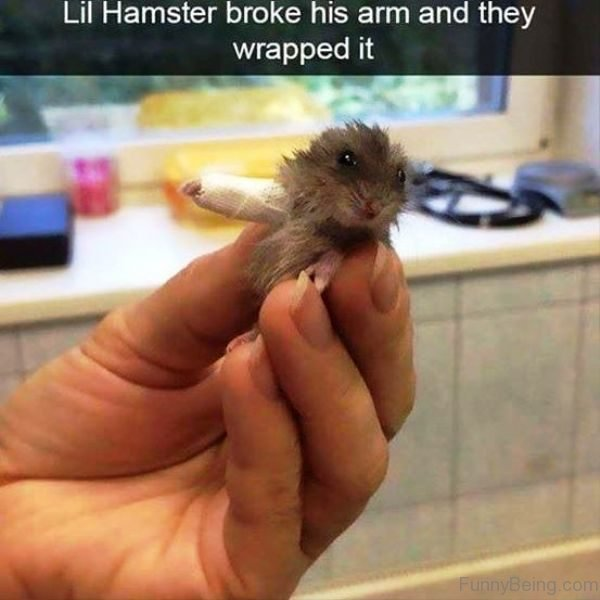 Lil Hamster Broke His Arm