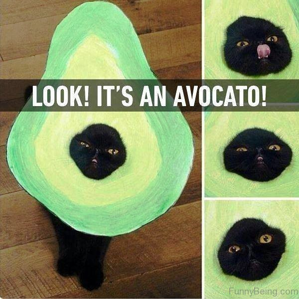 Look Its An Avocato