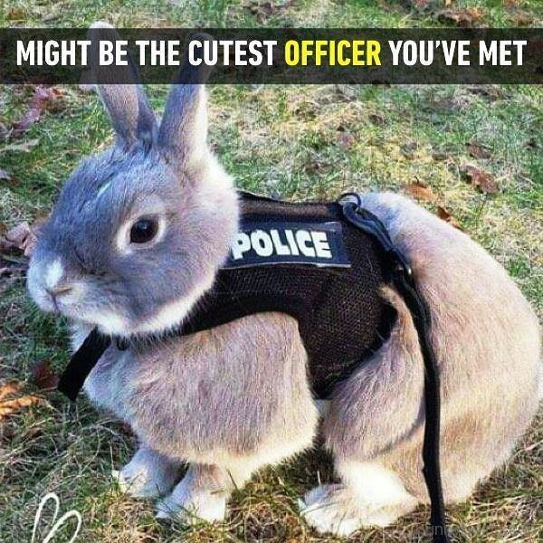 Might Be The Cutest Officer You ve Met