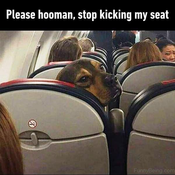 Please Hooman Stop Kicking My Seat