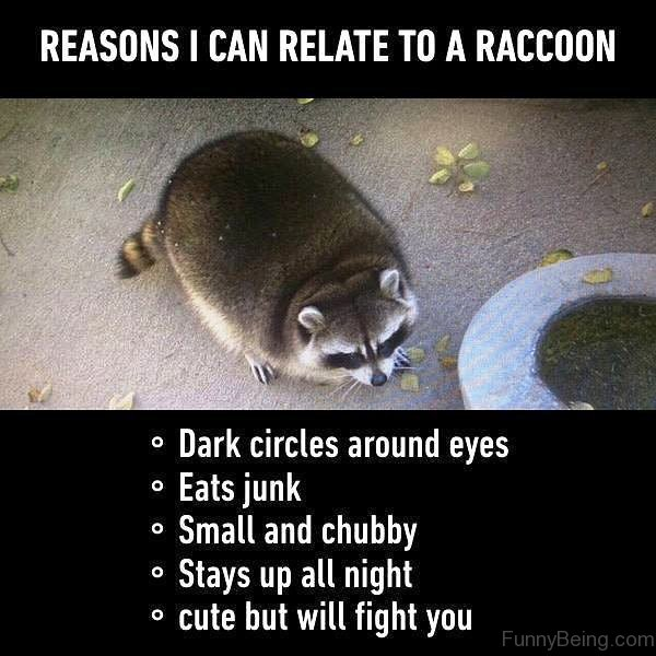 Reasons I Can Relate To A Raccoon