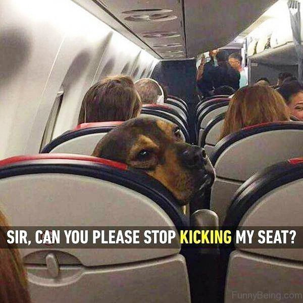 Sir Can You Please Stop Kicking My Seat