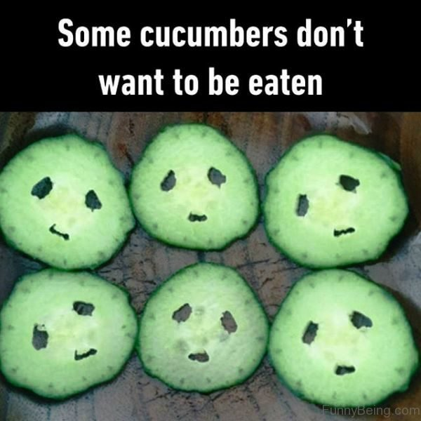 Some Cucumbers Dont Want To Be Eaten