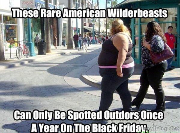 These Rare American Wilderbeastes