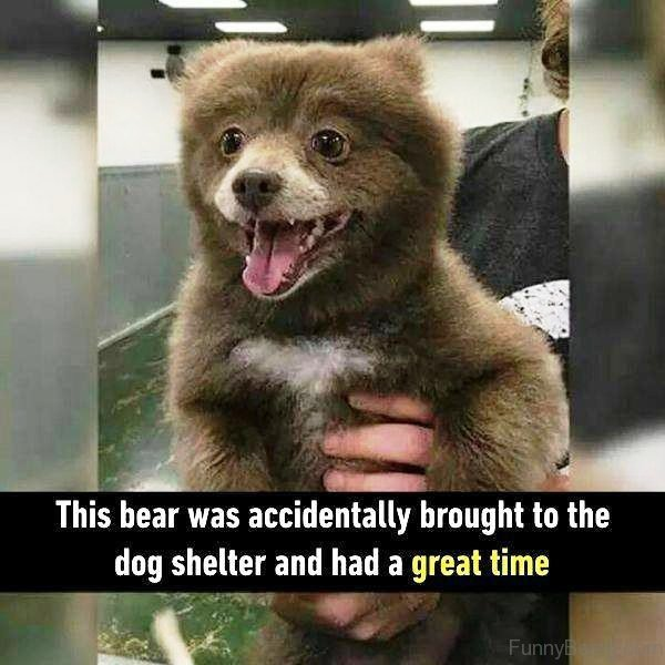 This Bear Was Accidentally Brought
