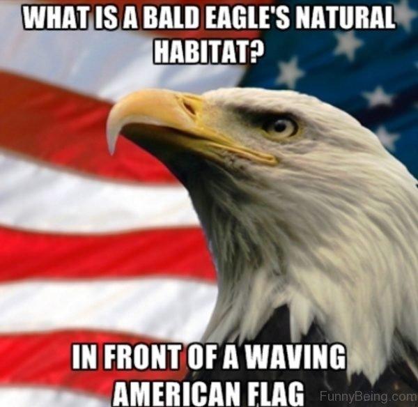 What Is A Bald Eagles Natural Habitat