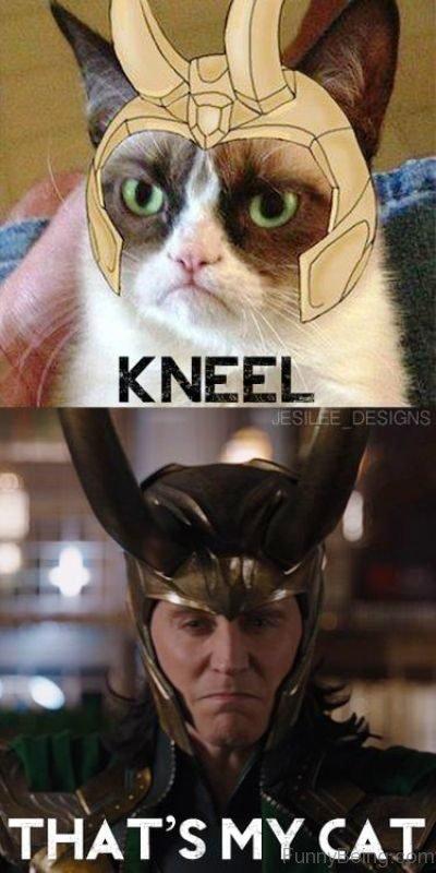 Thats My Cat