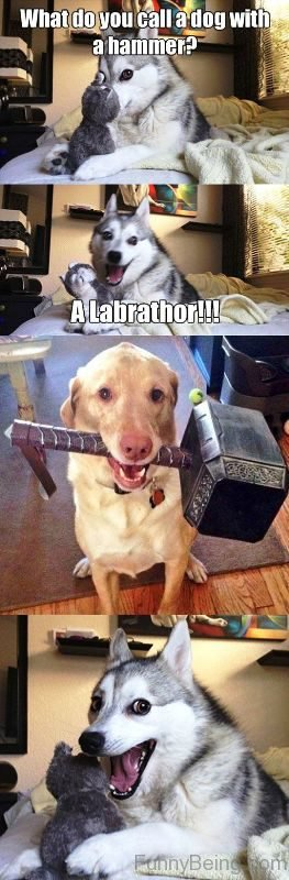 What Do You Call A Dog With A Hammer