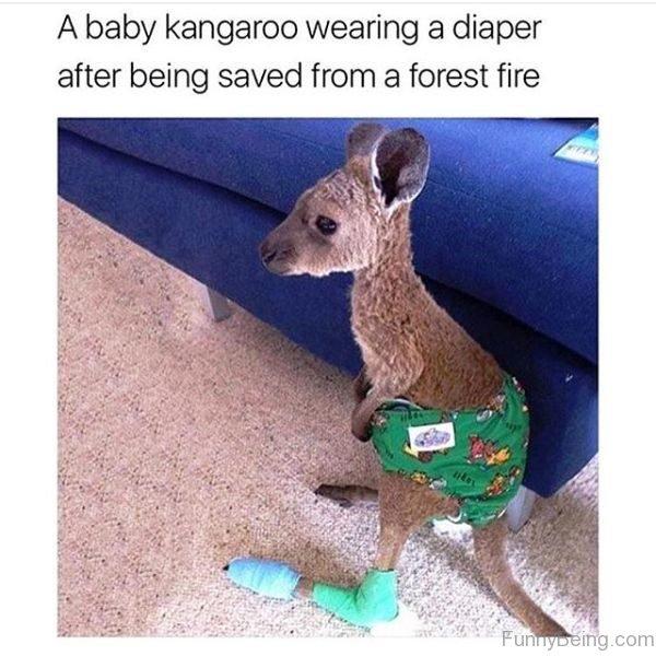A Baby Kangaroo Wearing A Diaper