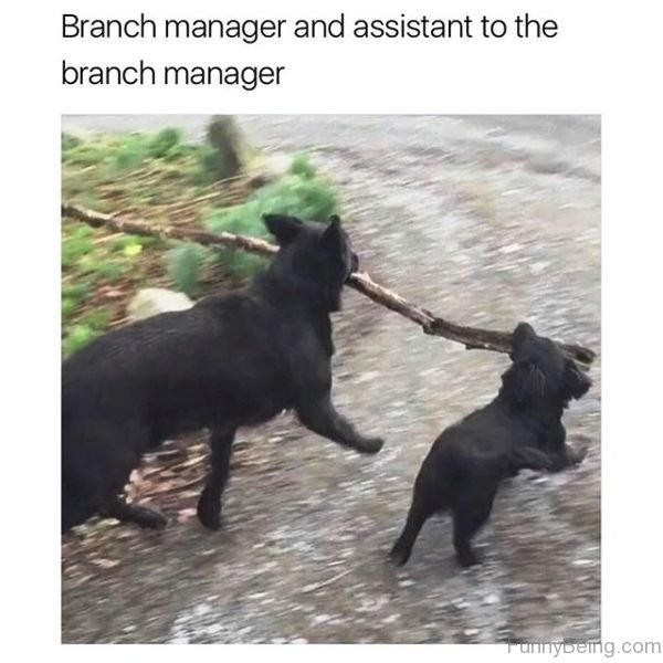 Branch Manager And Assistant