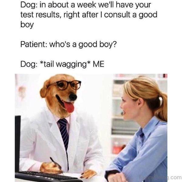 Dog Vs Patient