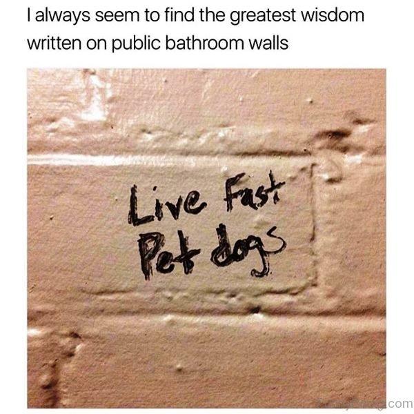 I Always Seem To Find The Greatest Wisdom
