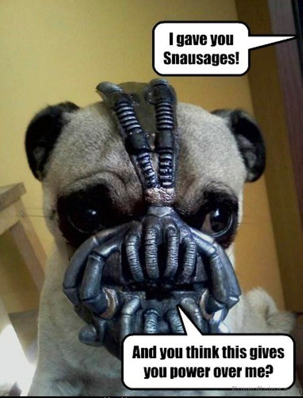 I Gave You Snausages